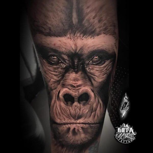gorila-2-lucas